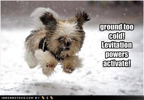 funny-dog-pictures-ground-cold