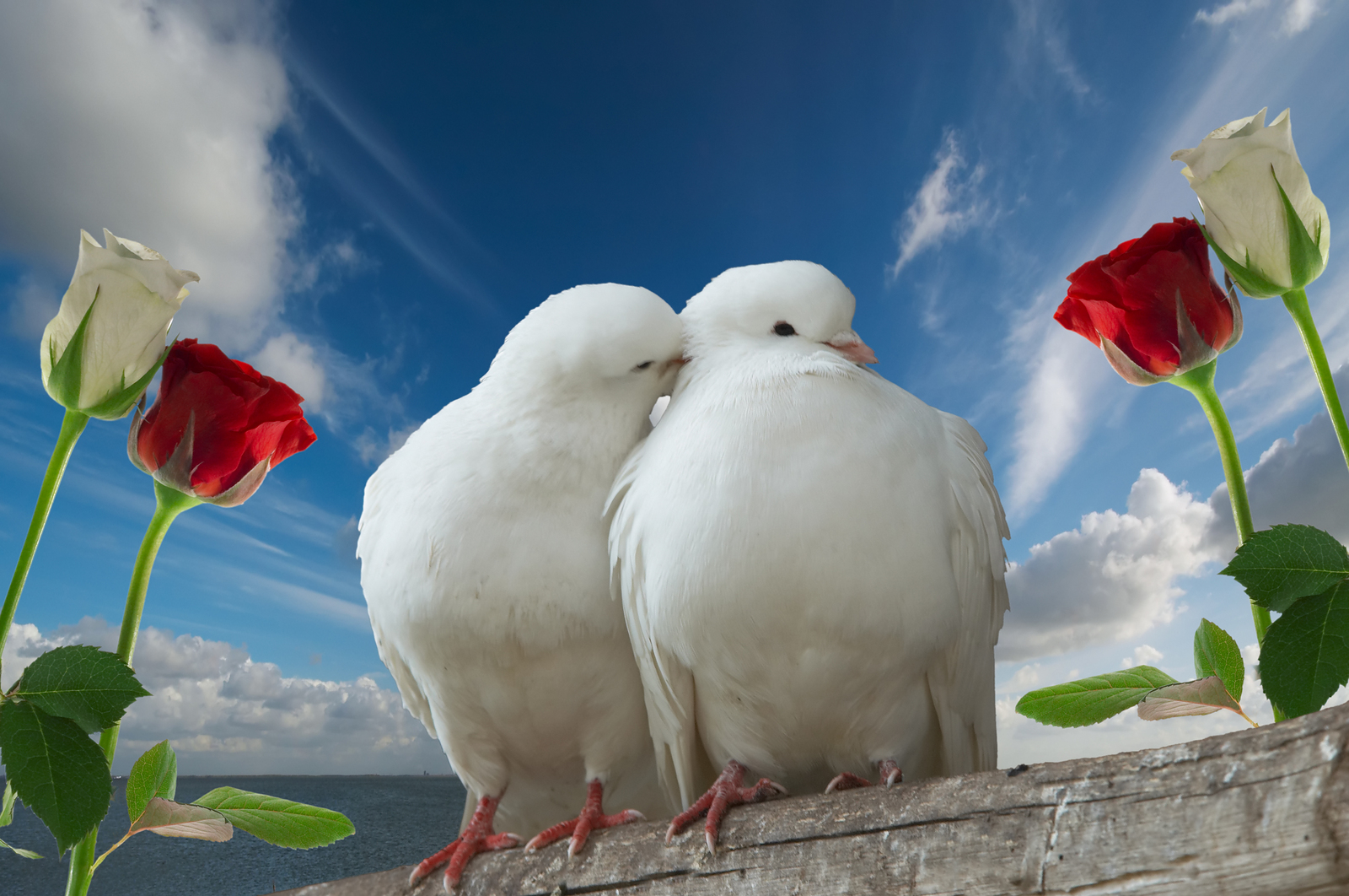 my love my dove Lyrics 1my god loves me his love will never end he rests with - in my heart for my god loves me 2 his gentle hand he stretches.
