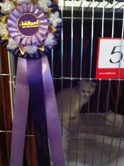 Best in Show Reserve