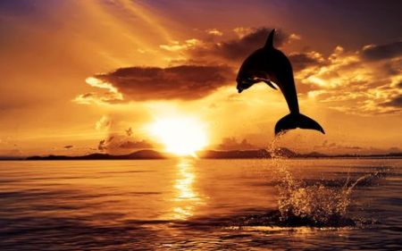 Dolphin-Sunset_large