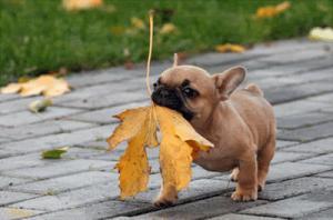 puppyautumn