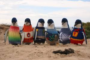 penguin-foundation-phillip-island