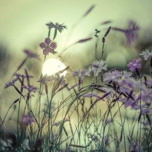 purpleflowers