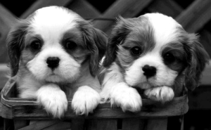 cutepuppies