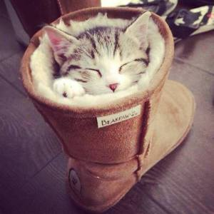 pussinboot
