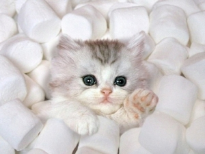marshmallowkitten