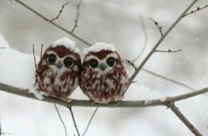 owlscute