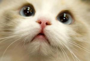 puddycat